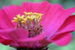 在花里面 免版税库存图片