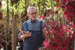在花附近的成人花匠 拿着片剂的手 在玻璃,胡子,佩带的总体 在庭院商店 图库摄影