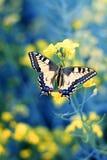 在花,关闭的五颜六色的蝴蝶 库存图片