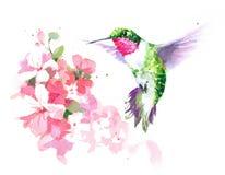在花水彩手拉鸟的例证附近的蜂鸟飞行 向量例证