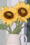 在花水罐的向日葵 库存图片