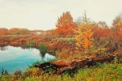 在苍白颜色的有雾的秋天风景-蓝色秋天河长满与在有雾的天气的芦苇 免版税图库摄影
