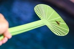 在苍蝇拍的死的黄蜂 库存图片