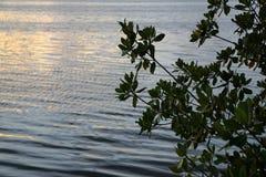 在苏必利尔湖畔的日出 免版税图库摄影