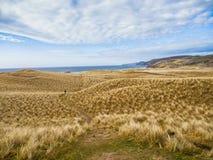 在苏格兰的北部的金黄沙丘 图库摄影