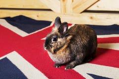 在英国地毯的兔子 免版税库存照片