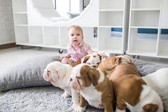 在英国牛头犬之间一只小女孩和逗人喜爱的小狗的友谊  图库摄影