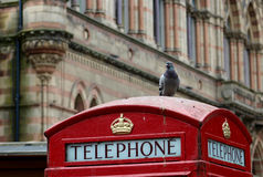 在英国电话亭(风景)的一只鸽子 免版税库存照片