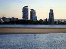 在英属黄金海岸的孤独的鹈鹕在澳大利亚 库存照片