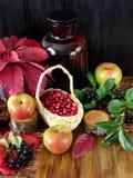 在苹果、黑花揪和红色秋叶围拢的一个柳条筐的蔓越桔 图库摄影