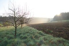 在苹果树的日出在春天 库存图片