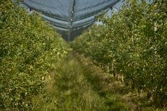 在苹果树里面 图库摄影