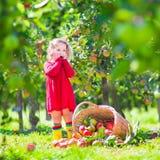 在苹果篮子旁边的小女孩在它的边tpped 库存图片