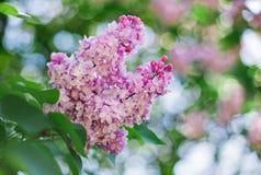 在茂盛植物前面的特写镜头桃红色淡紫色花 免版税图库摄影