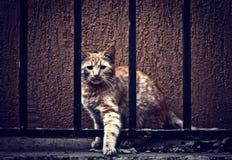 在范围之后的猫 免版税库存图片