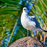 在茅屋顶的海鸥在海滩海滨del卡门, Yucat 免版税图库摄影