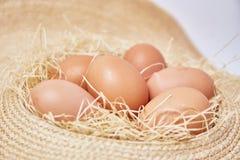 在茅草屋顶设置的鸡蛋 免版税图库摄影