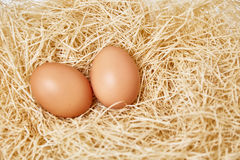 在茅草屋顶设置的鸡蛋 库存图片