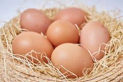在茅草屋顶设置的鸡蛋 免版税库存照片