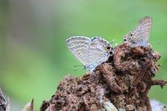 在茎的蝴蝶 库存图片