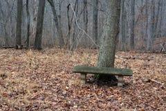 在茫茫荒野中长凳 免版税图库摄影
