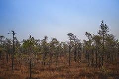 在茫茫荒野中-拉脱维亚沼泽 免版税库存图片