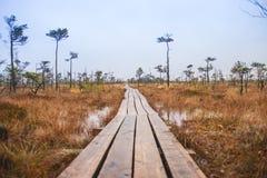 在茫茫荒野中-拉脱维亚沼泽 免版税库存照片