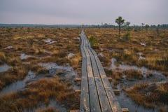 在茫茫荒野中-拉脱维亚沼泽 库存图片