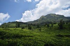 在茶园的美好的风景ungaran montain 图库摄影
