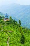 在茶山的寺庙 免版税库存图片