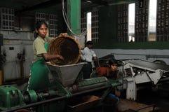 在茶工厂在斯里兰卡 库存图片