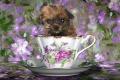 在茶杯的约克夏狗小狗 免版税库存图片