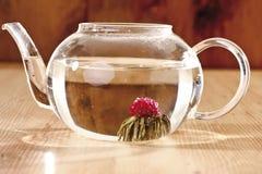 在茶玻璃的茶花 库存图片