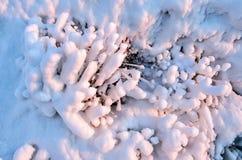 在草、冬天冰和水结冰的抽象自然秀丽的冰晶,草覆盖与在的冻雪 库存图片