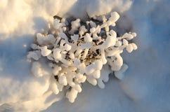 在草、冬天冰和水结冰的抽象自然秀丽的冰晶,草覆盖与在的冻雪 图库摄影