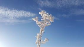 在草、冬天冰和水结冰的抽象自然秀丽的冰晶,草覆盖与在的冻雪 库存照片