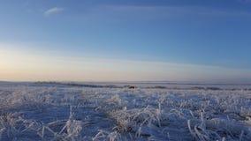 在草、冬天冰和水结冰的抽象自然秀丽的冰晶,草覆盖与在的冻雪 免版税库存照片
