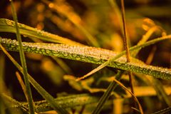 在草、叶子和分支的早晨露水在早晨秋天日出 免版税库存照片