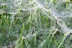 在草上的湿蜘蛛网 免版税库存图片