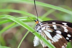 在草上的蝴蝶举行 库存图片