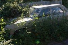 在草丛林的汽车  免版税图库摄影