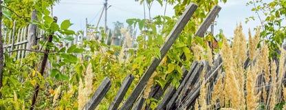 在草丛林的老佝偻病下落的木后院篱芭在村庄 库存照片