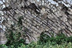 在草丛林的老墙壁  库存图片