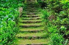 在草中的老石台阶 库存照片