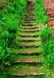 在草中的老石台阶 图库摄影