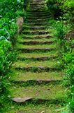 在草中的老石台阶 免版税库存照片