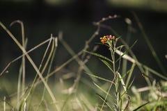 在草中的花 免版税库存照片
