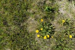 在草中的花 免版税库存图片