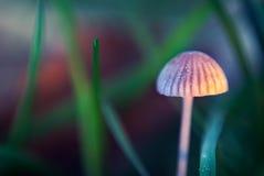 在草之中的微小的蘑菇 免版税库存照片