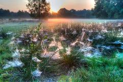 在草之间的蜘蛛网 库存照片